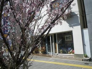 いつの間にか桜